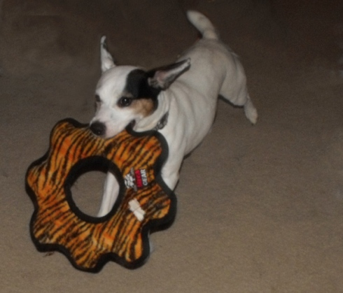Day 85: Brody's New Toy