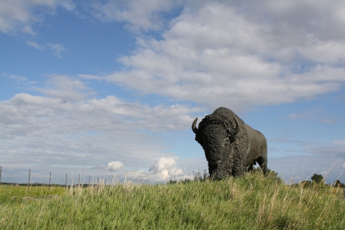 Buffalo on the Nebraska Prairie