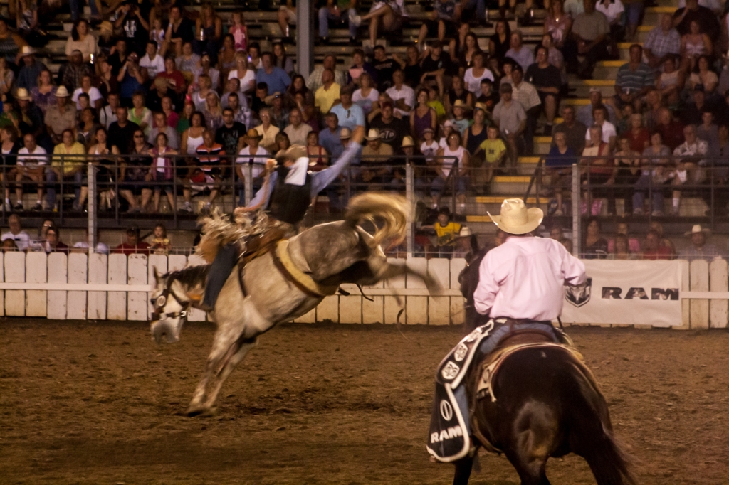 Saddle bronc at the Sidney Iowa Rodeo