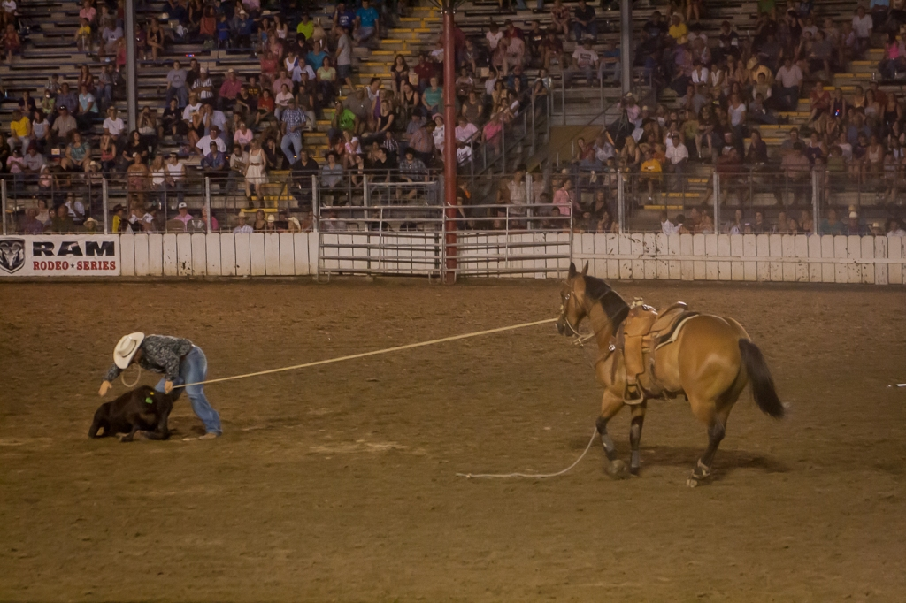 Calf Roping at the Sidney Iowa Rodeo